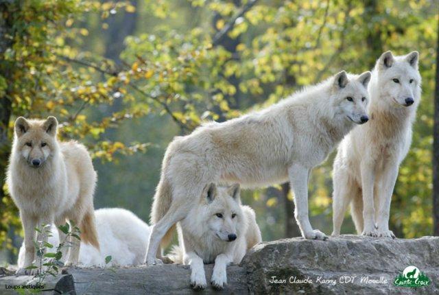 Dansez avec les loups le temps d 39 un s jourle blog du tourisme insolite - Dormir avec les loups en france ...