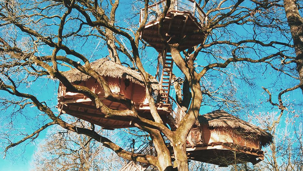 Cabane dans les arbres le chêne fou